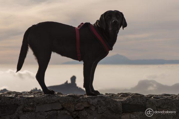 Foto de perro con el Roque Nublo y el Teide en el Pico de Las Nieves