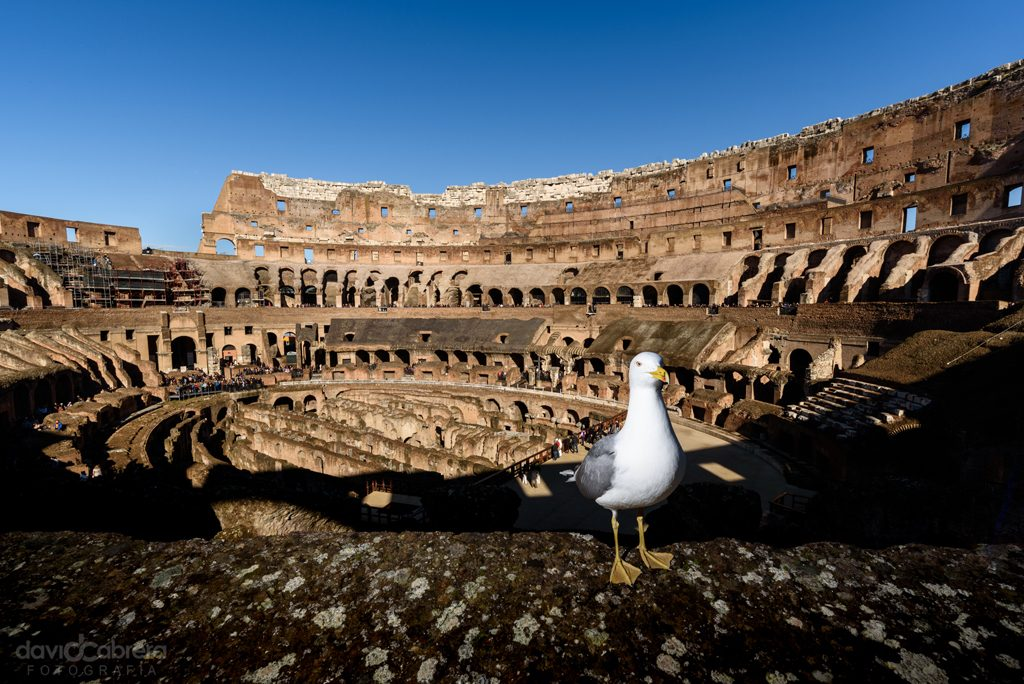 Gaviota en el Coliseo de Roma